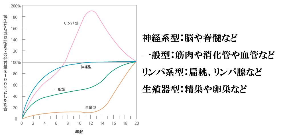 スキャモンの成長曲線グラフ